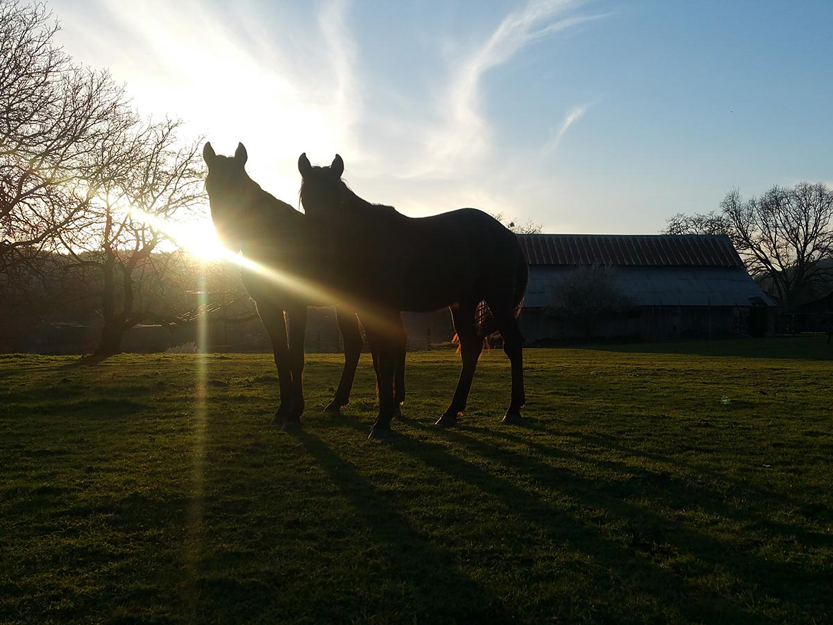 The sunset pierces rays of light across the shoulders of two horses