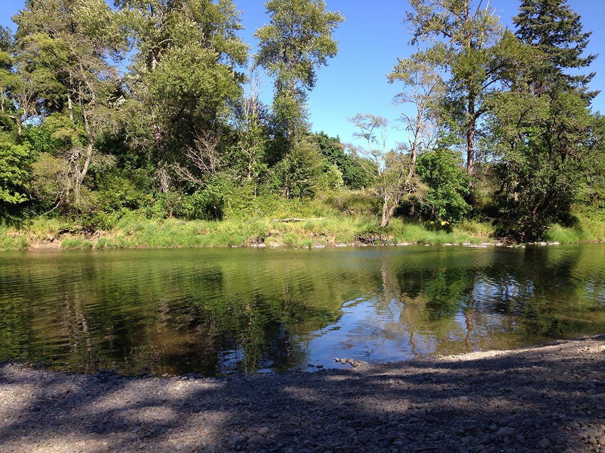 A peaceful swimming hole is surrounding by tall oaks and pines